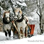 Wonderful Wednesday Blog Hop #205