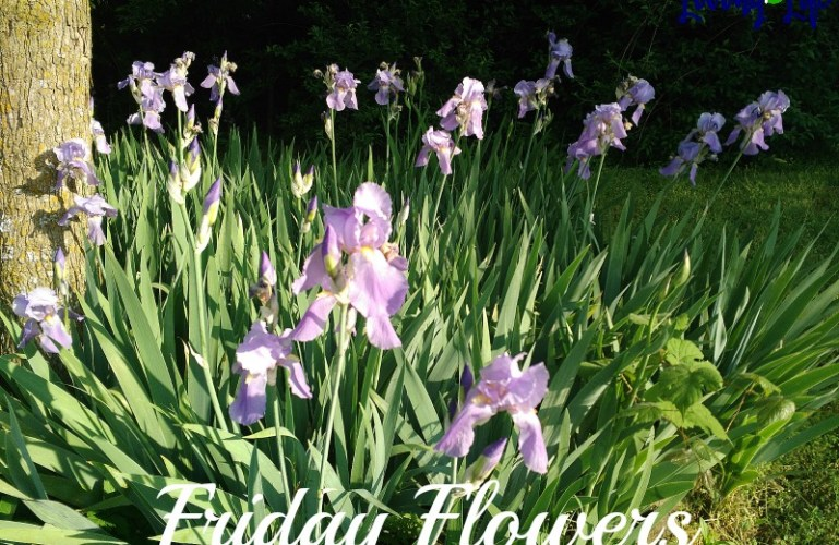 Friday Flowers