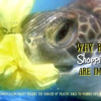 Why Reusable Shopping Bags Are Important