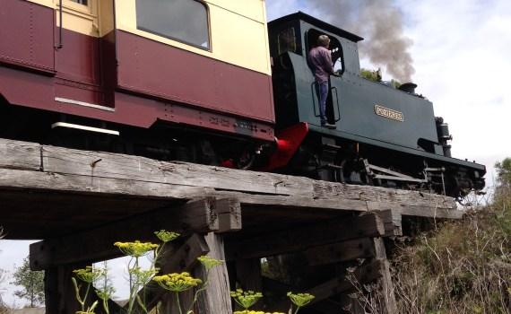 Bellarine Steam train0260