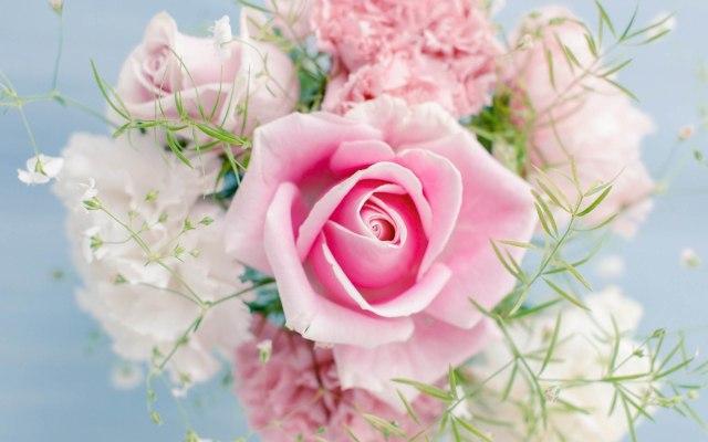 pink rose hd wallpaper