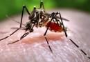 Cách phòng tránh nhiễm virus Zika cho các mom