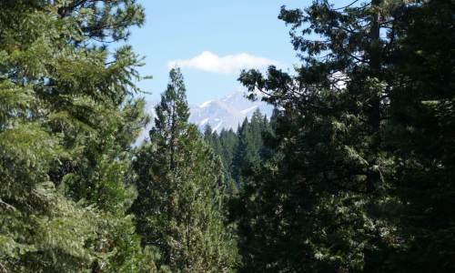 5 acres Mount Shasta View Lands (1)