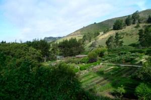 Above Veiw of Zen Center Green Gulch grounds