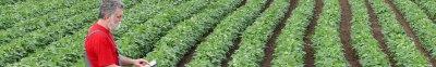 Interest Rates | Capital Farm Credit