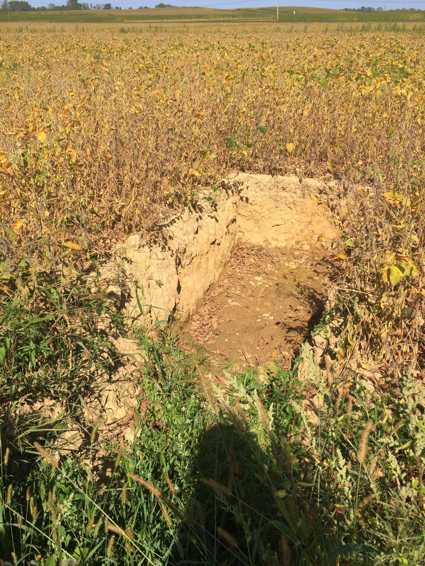Chic Location Without A Perched Water Perched Water Table At Rock Springs Agricultural Research Center Perched Water Table Problems Perched Water Table Artesian Well houzz-03 Perched Water Table