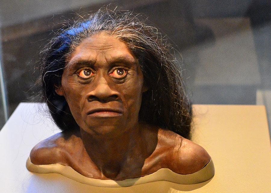 """Hobbitlike"" ancient human"