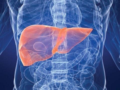 artificial-liver