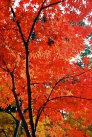 毘沙門堂の紅葉2016見ごろ時期と紅葉狩りスポットはココ!