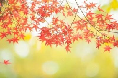 大阪の紅葉2016名所や穴場スポットと見ごろ時期やライトアップ