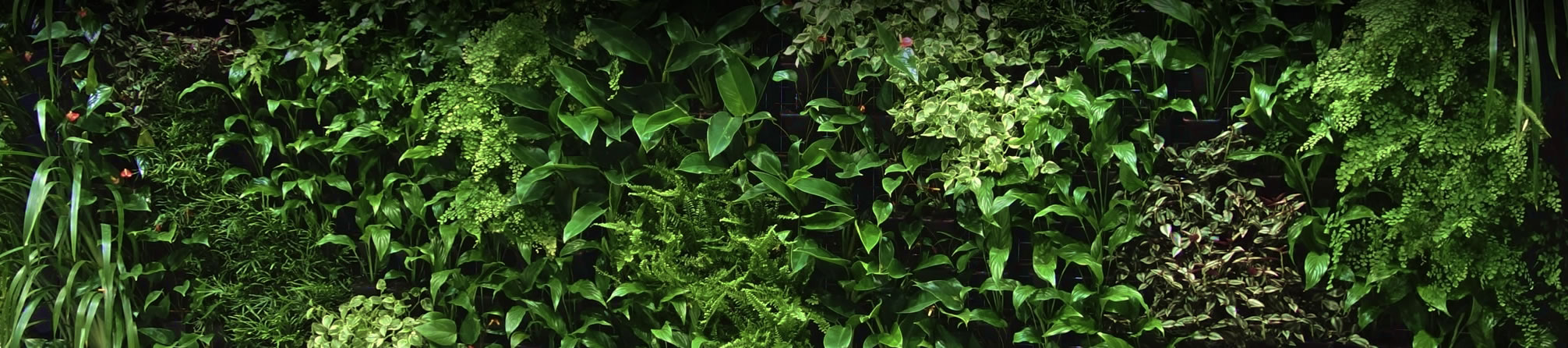 Fullsize Of Vertical Gardens Solutions