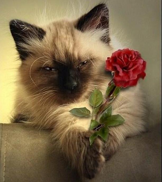 8 марта кот