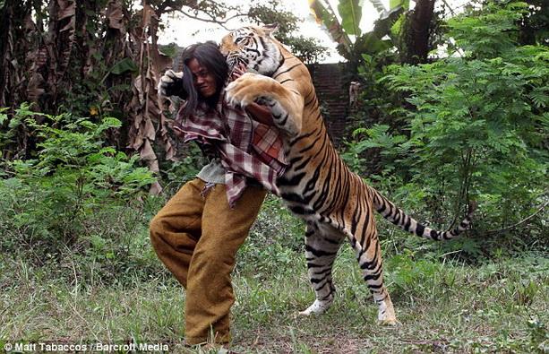 странная дружба человек и тигр