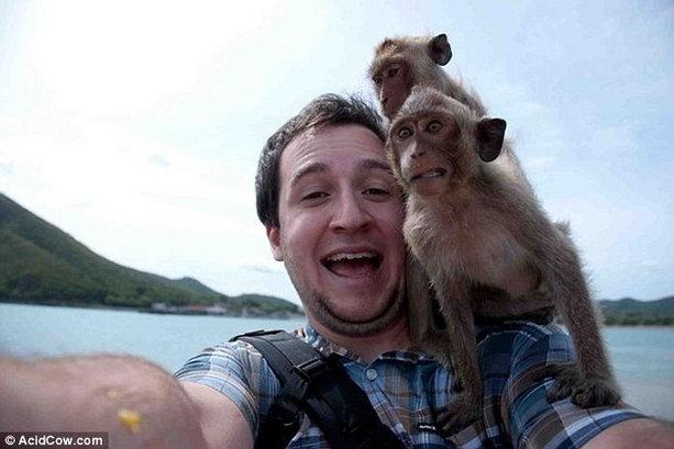 наглые обезьяны