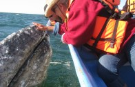 The Gray Whales Choose Us Conference Edition