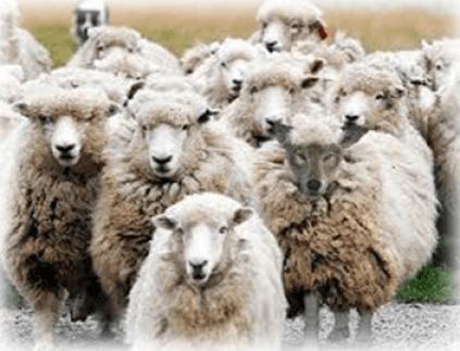 Sheep-OSA