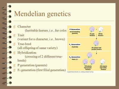 Mendelian Genetics. - ppt download
