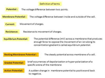 The Membrane Potential - ppt download