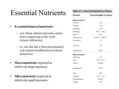 Mineral Nutrition in Plants I - ppt video online download