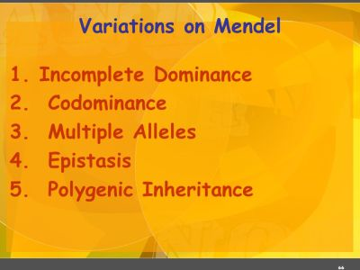 Mendelelian Genetics Dr. R. Siva VIT University, INDIA - ppt download