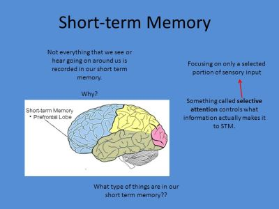 Memory/Cognition Describe and differentiate psychological and physiological systems of memory (e ...