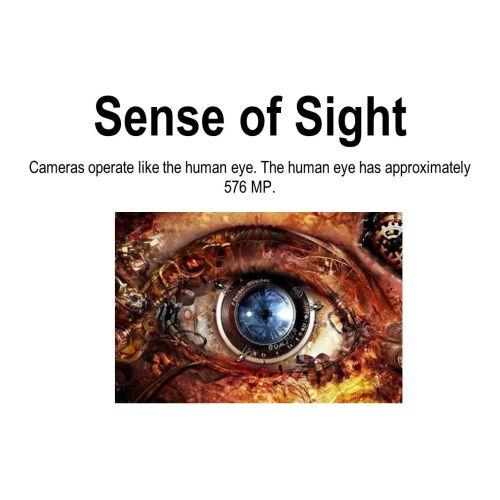 Medium Crop Of Sense Of Sight