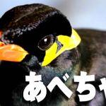 【第106回】阿部ちゃんでもパチスロ海物語のハイエナで40万勝っていた?