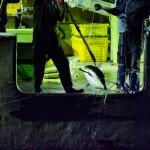 수산업 강국 한국 식탁에 올라온 인권유린