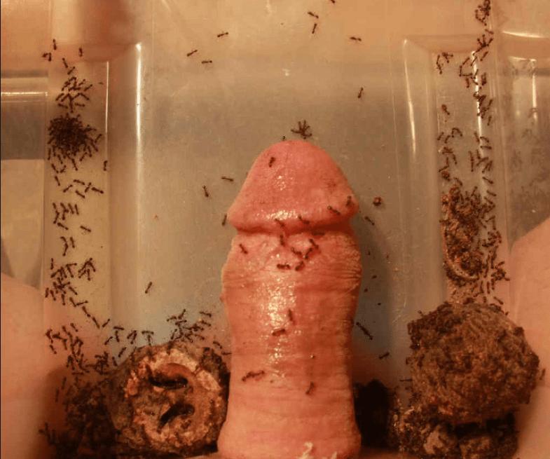 sensual cock ball torture