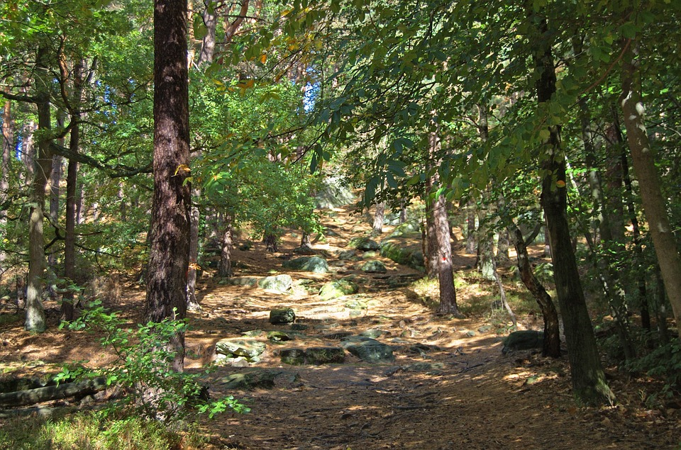 Small-World-Tv-Forest-Schools