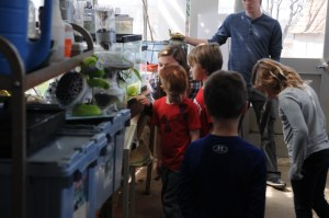 Students learn about turtles