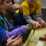 An east student teaches the Pembroke Hill children about how to hold a salamander. Photo by Ty Browning