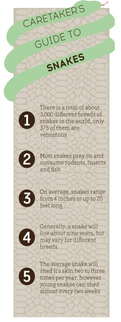 snakesidebar