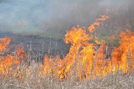 Incendiu de vegetatie uscata la Satu Mare