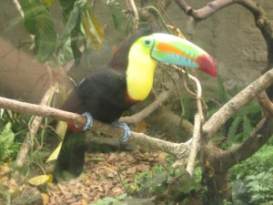 Zoo resident, Colombia
