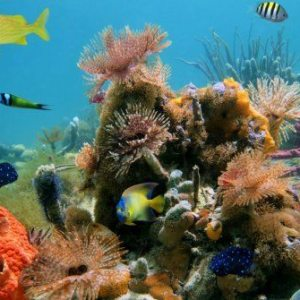 The Best Costa Rica Snorkeling Locations