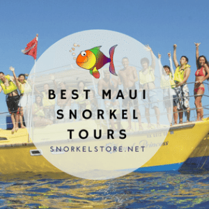 The 5 Best Snorkel Tours in Maui | Guided Snorkeling on Maui