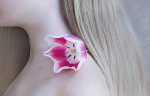 tulip-1309666_1280