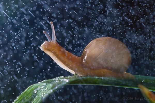 улитка под дождем