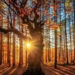 Духовный путь — это путь к вам Истинному