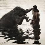 Слон Бозо и маленький человек