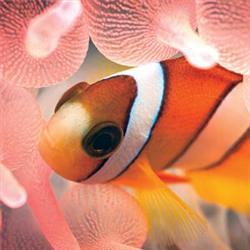 Scripps Birch Aquarium
