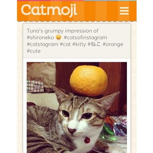 Catmoji; the social network for cats. (Image: crstjohn81 (CC) via Flickr)