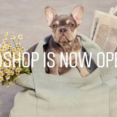 Instagram launches new @shop account for those who love to shop