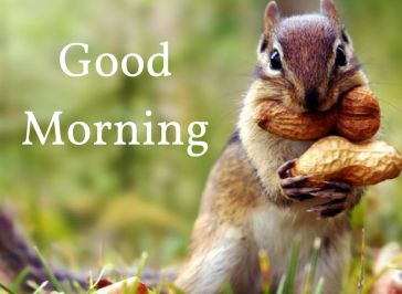 good morning, cute image