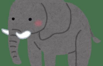 animal_zou