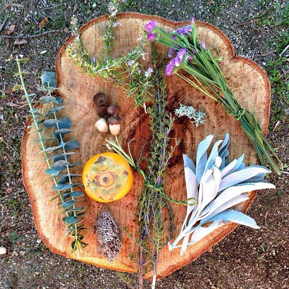 Summer Solstice Plants