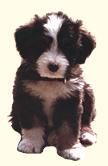Sofi's Puppy