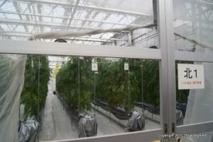 太陽光利用型植物工場の栽培室