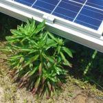 太陽光発電の雑草対策まとめ